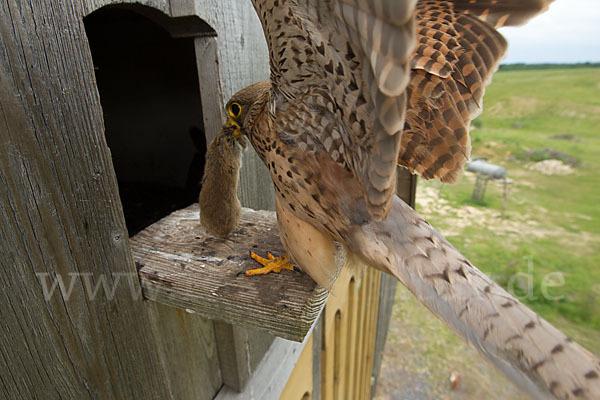 füttern von greifvögeln
