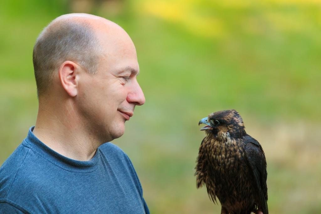 Falkner Frank Seifert übernimmt schwerpunktmäßig die Rehabilitation der Falken in unserer Station