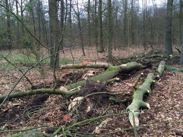 Baumfällung_eine komplette Brut wurde zerstört
