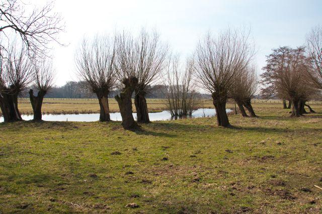 Geeignetes Revier für Steinkäuze: hier gibt es Viehhaltung, viele Kopfweiden mit genügend Versteckmöglichkeiten, sowie kurzes Gras