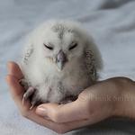 Patenschaften für Eulen und Greifvögel