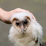 Internationale Beratung der Greifvogelhilfe