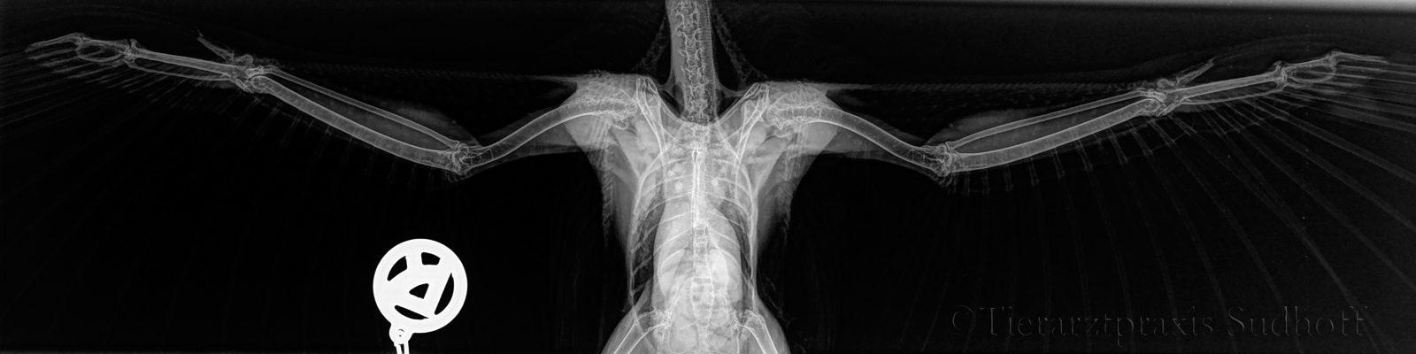slider_roentgen_x-ray-jpg