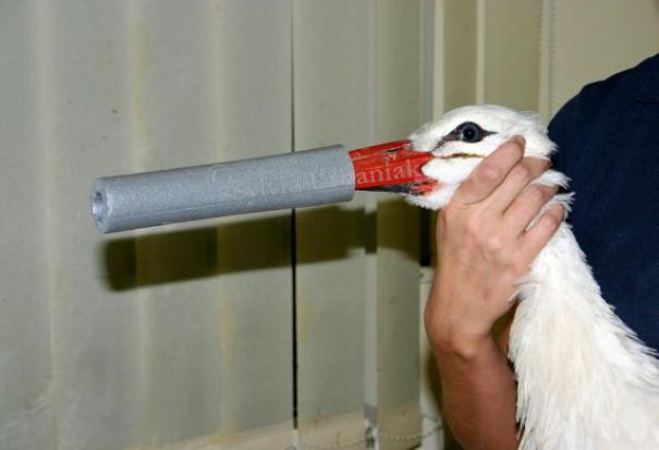 Beispiel zum richtigen und ungefährlichen Handling mit Störchen