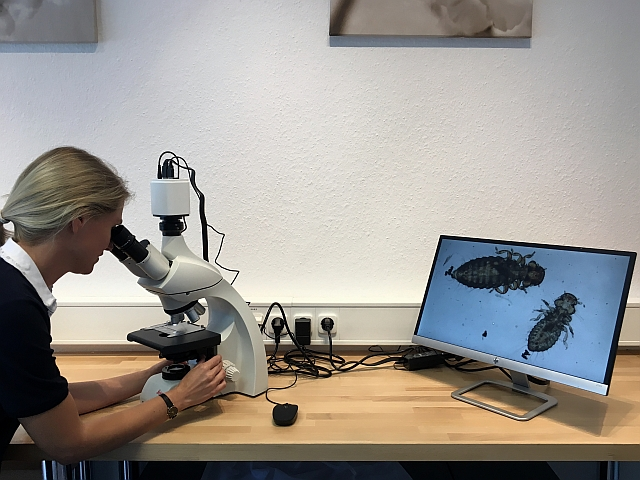 Mikroskop kaufen vergleichen u2013 equalfalse.com