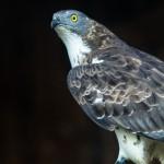 Die Sachkundeprüfung zur Greifvogelhaltung